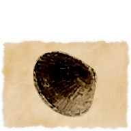 Model-Vongola Clam.png