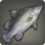 Red-eyed Lates Icon.png