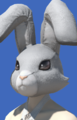 Model-Rabbit Head-Female-Roe.png