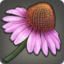 Coneflower Icon.png