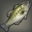 Night's Bass Icon.png