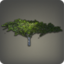 Desert Ironwood Icon.png