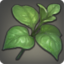 Persimmon Leaf Icon.png