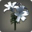 White Brightlilies Icon.png