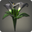 Black Arums Icon.png