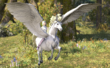 Pegasus Whistle--20151113120347.png