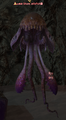 Shore Jellyfish.png