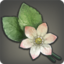 Nymeia Lily (Planting the Seed) Icon.png